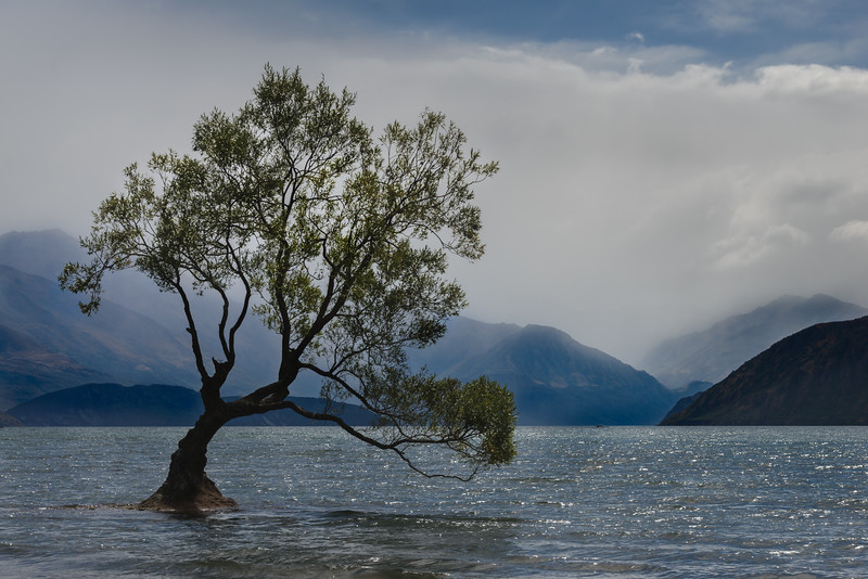 NZ-WANAKA TREE-32-Edit.jpg