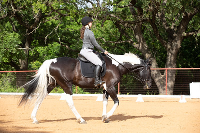 Horse 227