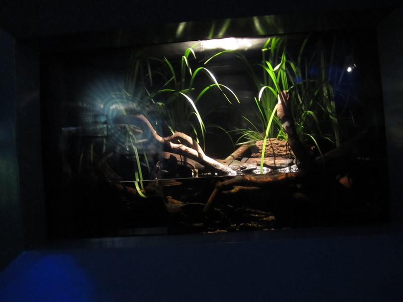 Sydney - Sydney Aquarium-41.JPG