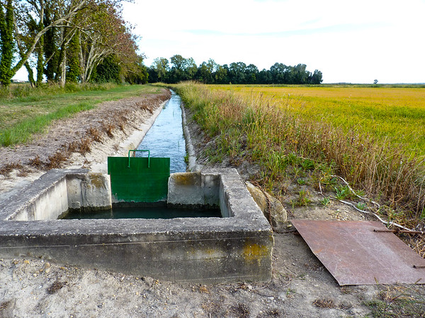 Irrigation Channel for Rice Production in Camargue, France