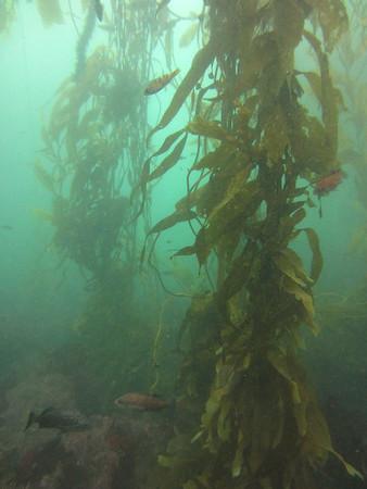 2014-09 Monterey