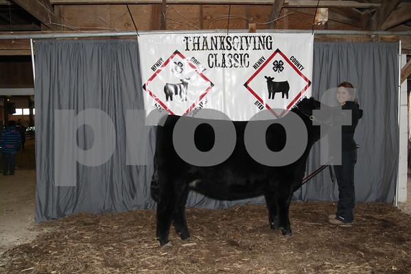 Heifer Show Backdrop