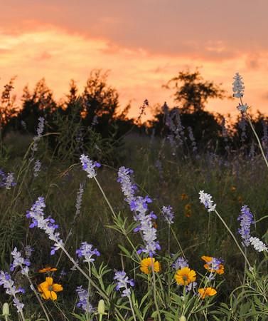 Texas General Nature