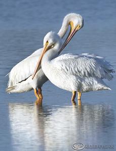 Birds (1 of 2)
