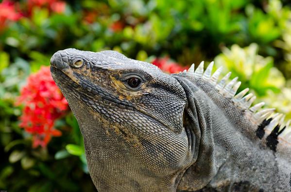 Costa Rica: Dec 26-27, 2010 - La Fortuna and Arenal