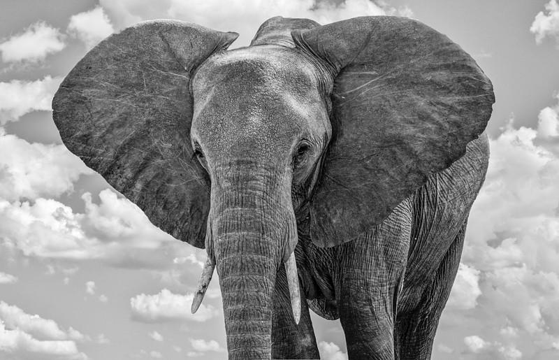 Elephants-17.jpg