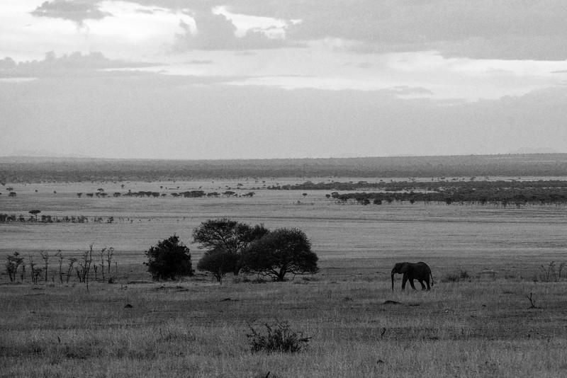 Elephant-Scape-Serengeti copy-1.jpg