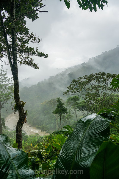 View Into the Rain Forest