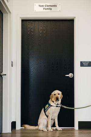 Canine Companions Dec 2020