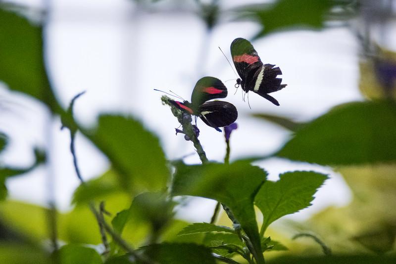 butterfly-123.jpg