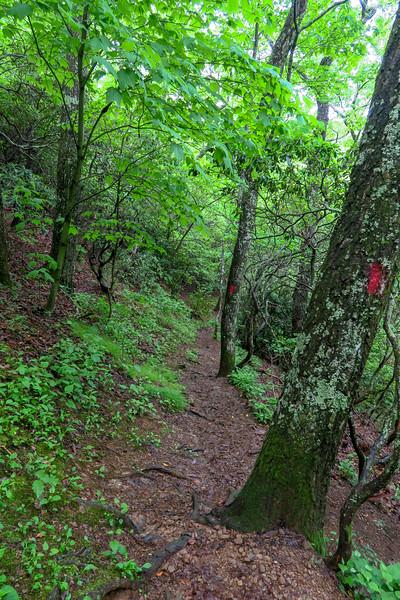 Sleepy Gap Trail -- 2,900'