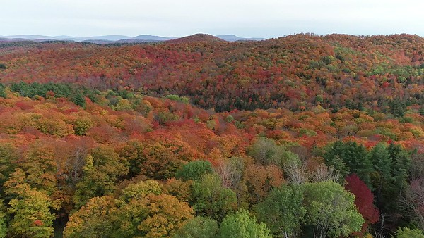 Fall Foliage in the Vershire Hills