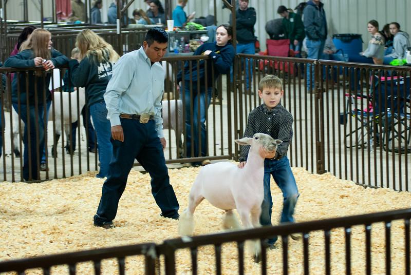 kay_county_showdown_sheep_20191207-57.jpg