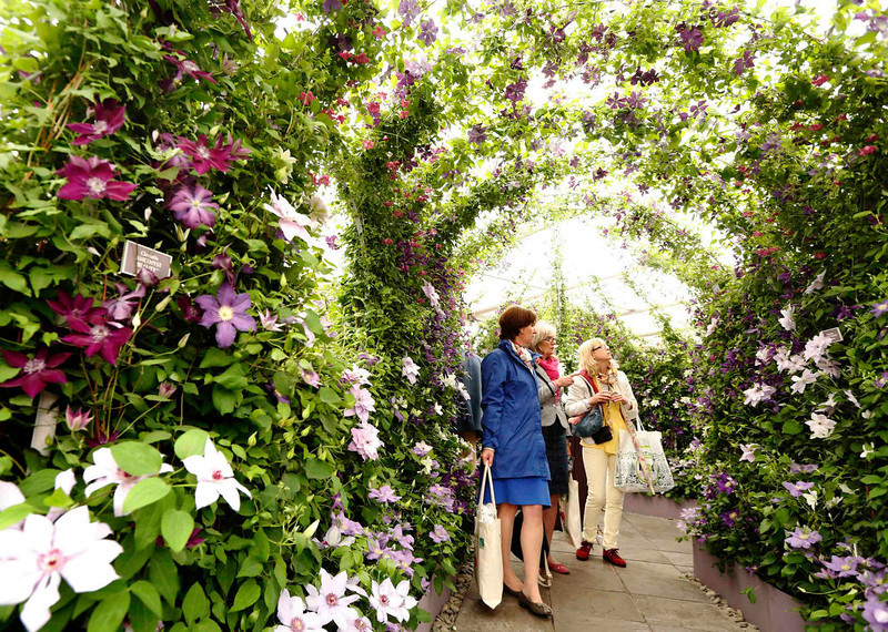 . Visitors walk through a tunnel of clematis at the Raymond Evison Clematis stand at the Chelsea Flower Show in London May 21, 2013. REUTERS/Luke MacGregor