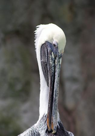 National Zoo 7.26.08