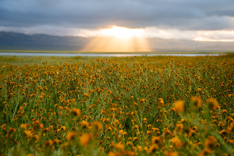 Light filters into the Carrizo Plain during a rare spring superbloom of wildflowers.