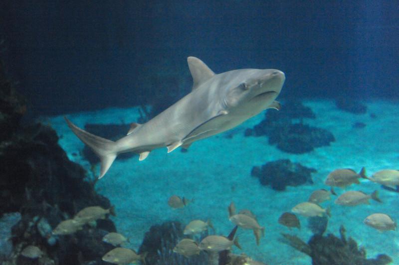 Living Seas Aquarium