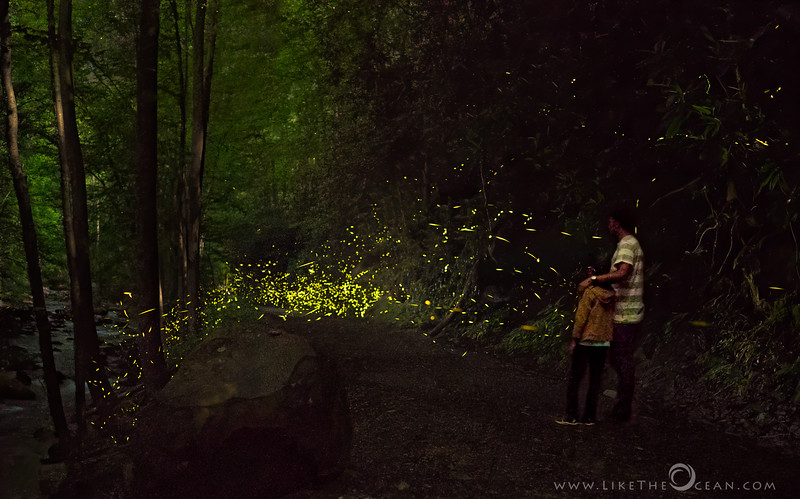 The Path of Fireflies