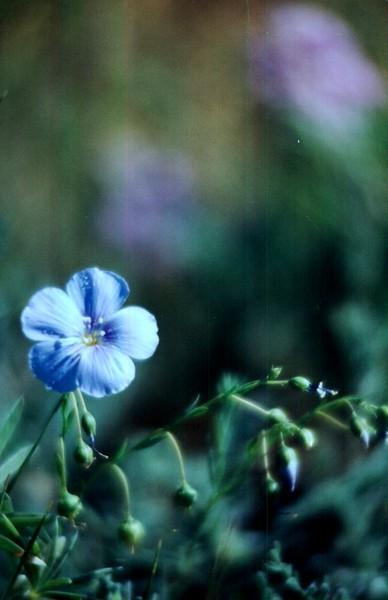 amh FLOWERS (1140).jpg
