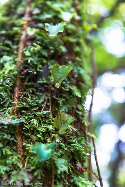 Greenery at Waiau Falls Scenic Reserve walk