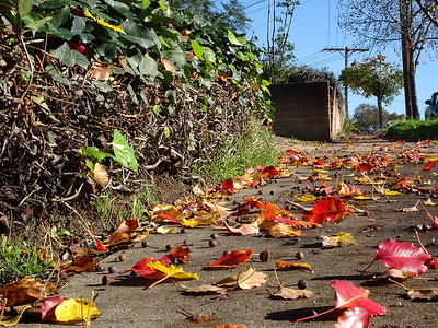Leaves on the Ground: January 2017