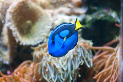 Aquarium Exhibits