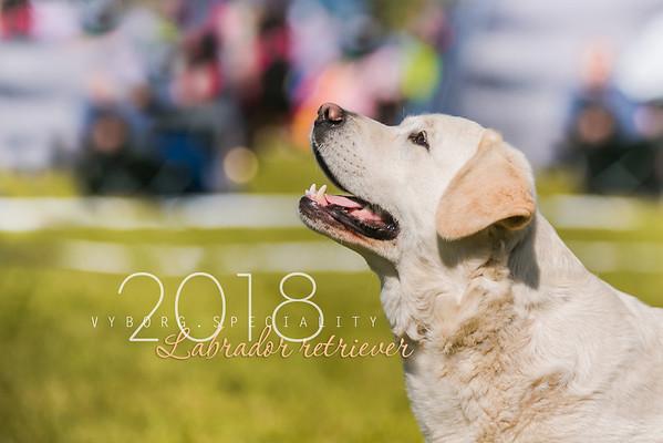 Labrador Retriever Speciality Vyiborg 23.06.2018