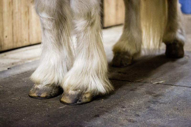 Beattle Bailey's feathered feet.