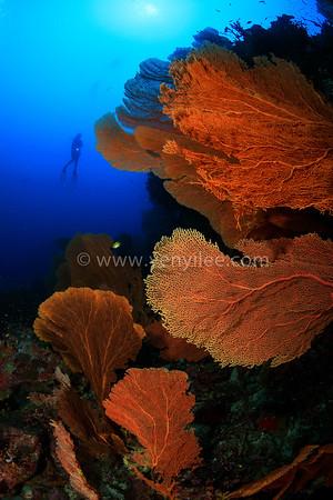 Pulau Weh - City of Sea Fans