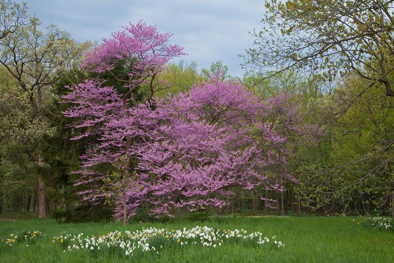 Spring13-0389.jpg