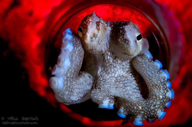 octopus in a bottle_kraken_red (1 of 1).jpg