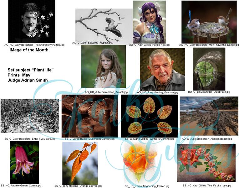 5 may plant life prints  copy.jpg