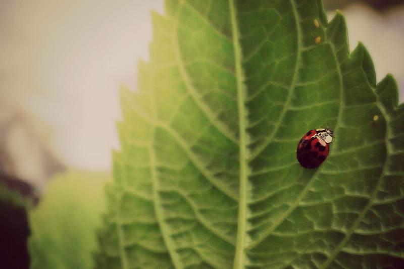 """Lady bug, lady bug, fly away home."""