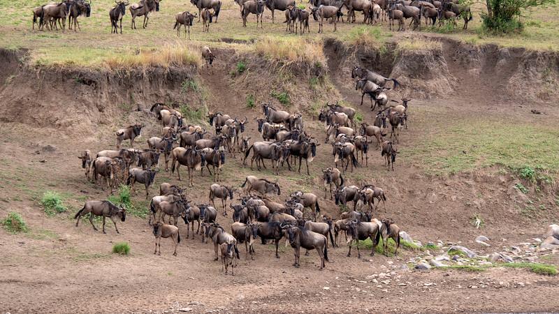 Tanzania-Serengeti-National-Park-Safari-Great-Migration-Wildebeest-10.jpg