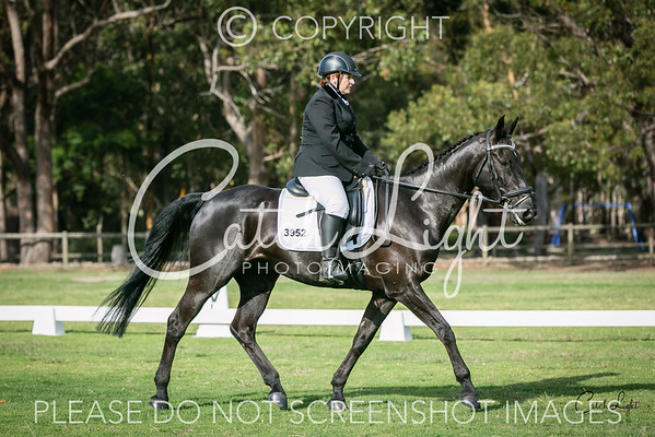 Warringah Dressage 20-11-16