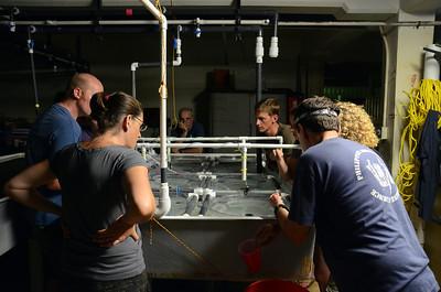 SECORE Coral Spawning at UOG Marine Lab -