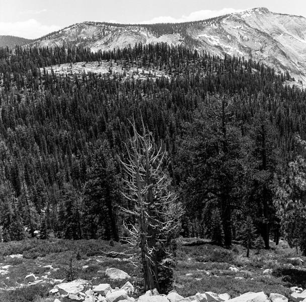 Yosemite_052018014.jpg
