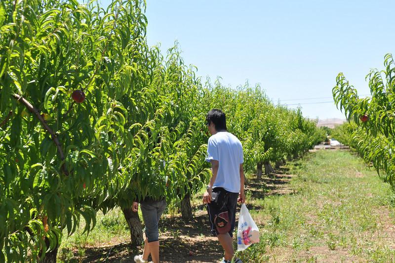 Brentwood Fruit Picking 2010/06/05