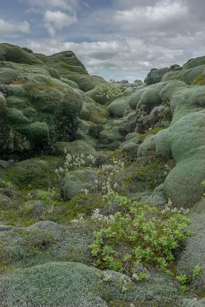ICELAND- MOSSY ROCKS-14.jpg