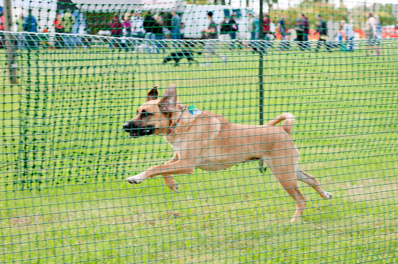 2011 Bark in the Park-159.jpg