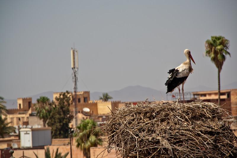 morocco_6207039066_o.jpg