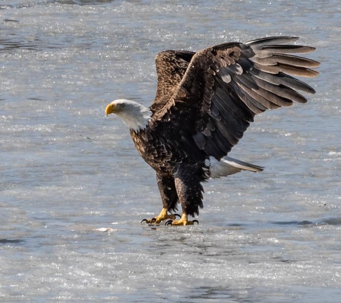 03-17-2020-eagles-4.jpg
