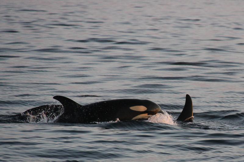 Alaska 2009-951.jpg