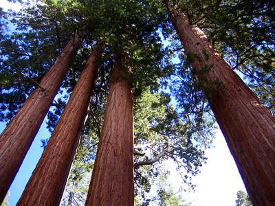 Sequoia NP 2006