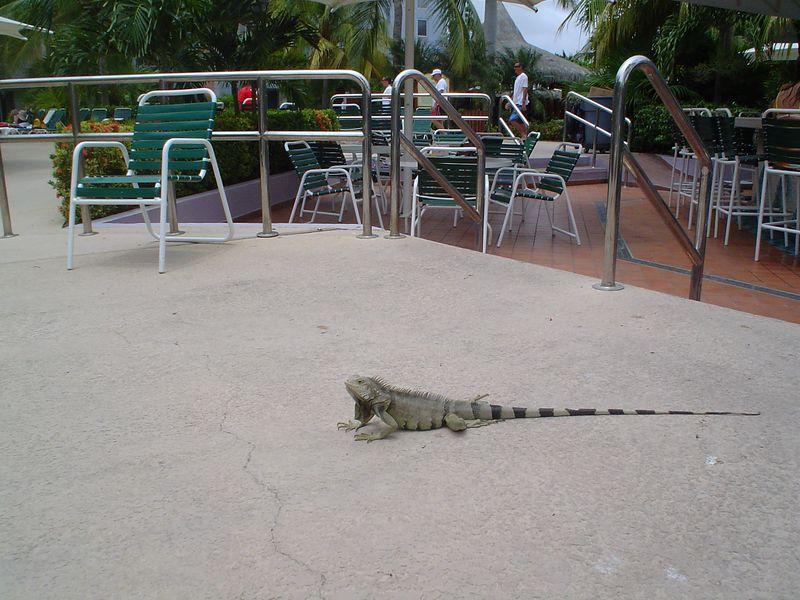 Aruba 2005 016.jpg