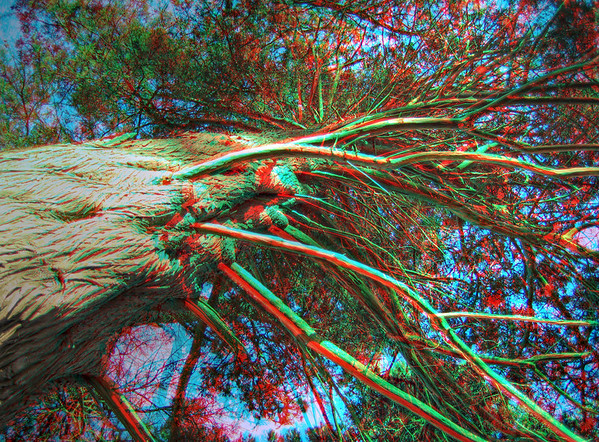 Golden Gate Park - in 3D (red/cyan glasses required)