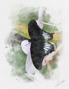 Watercolor Images
