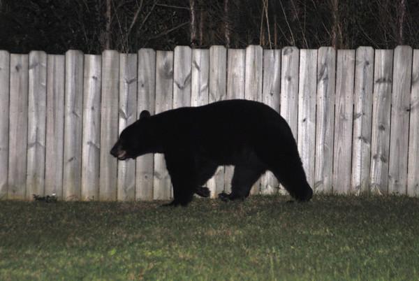 Neighborhood fauna