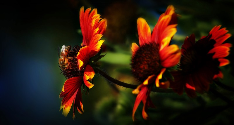 Bees by Ray Bilcliff - www.trueportraits.com