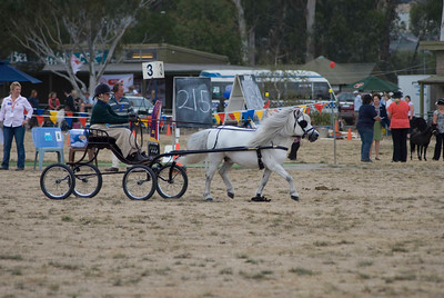Berwick Show 2009 - Harness Saturday - Gallery 1